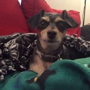 hot diggity dog daycare 19 photos pet boarding pet With dog boarding las vegas strip