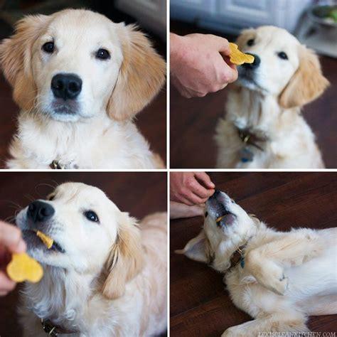 Grainfree Dog Treat Recipe