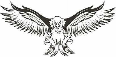 Eagle Wings Spread Clipart Wing Drawing Eagles