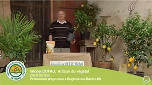 Planter Un Citronnier : comment planter un citronnier ou un oranger ~ Melissatoandfro.com Idées de Décoration