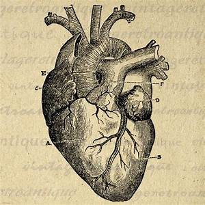 Digital Heart Diagram Graphic Image Medical By