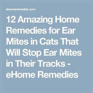 home remedies for ear mites in cats best 20 ear mites ideas on ear mites