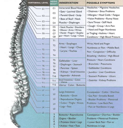 nerve pain cervical nerve pain chart
