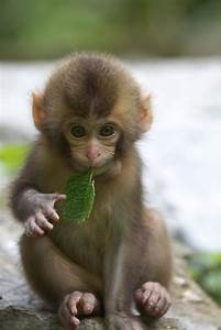 Adorable Baby Monkey Wallpapers