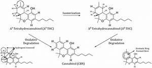 thcv biosynthesis
