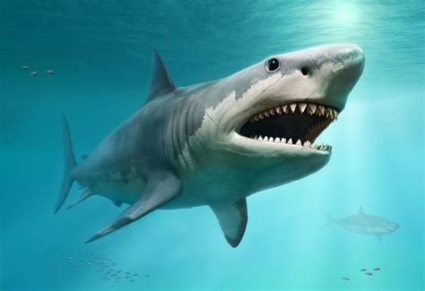 Super-steamy Megalodon May Have Been Too Hot To Avoid