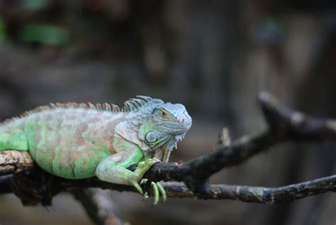 Cute Kitchen Decorating Ideas - what to expect from a pet iguana
