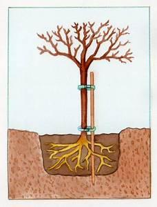 Quand Planter Un Pommier : quand planter un pommier ~ Dallasstarsshop.com Idées de Décoration