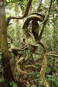 Rainforest Undergrowth - Stock Image C001  9702