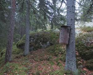 A Typical Flying Squirrel Nest Box In Finland  Nest Boxes