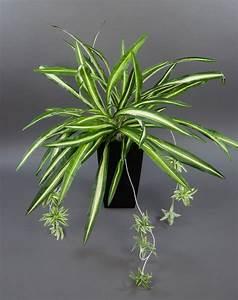 Orchideen Ohne Topf : gr nlilie 60x54cm ohne topf pf kunstpflanzen k nstliche pflanzen spider pflanze ~ Eleganceandgraceweddings.com Haus und Dekorationen