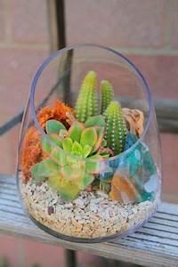 Sukkulenten Im Glas Pflanzen : sukkulenten im glas im blickfang kreative deko ideen mit pflanzen pflanzen ~ Eleganceandgraceweddings.com Haus und Dekorationen