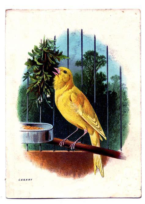 canary cliparts   clip art  clip art  clipart library