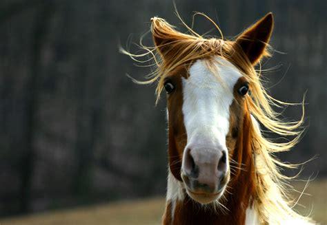 horse nervous system autonomic scared frightened vs treadmill