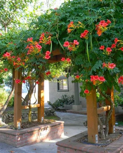 plantes grimpantes pour pergola les 25 meilleures id 233 es de la cat 233 gorie plante grimpante sur treillage jardin