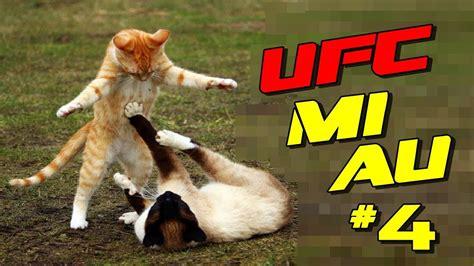 briga de gatos engracados   ultimate cat fight youtube
