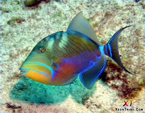 colorful saltwater fish 16 best images about saltwater fish on