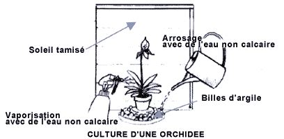 entretien orchid 233 e en pot apres floraison photo de fleur une pensee fleuriste