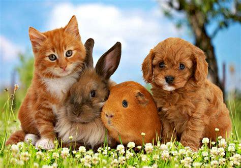 Pet Animals Wallpapers - pets animals wallpaper 38745689 fanpop