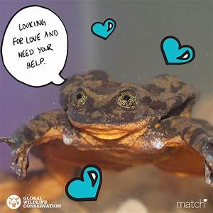 Endangered Water Frog Gets Match Profile To Find Mate
