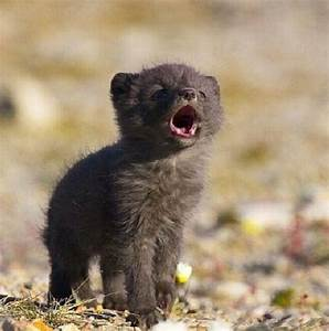 1000+ images about Wolf puppy on Pinterest | Wolf pup ...