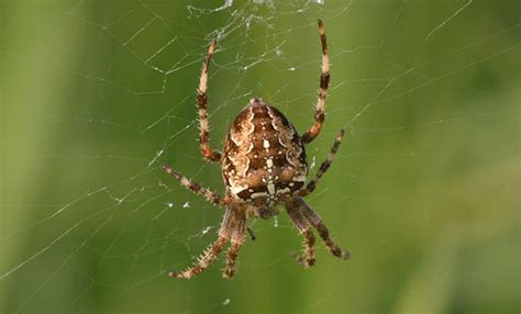 spinnen rondom huis bestrijden duurzame en