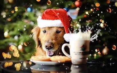 Christmas Dog Wallpapers Wallpapertag Windows