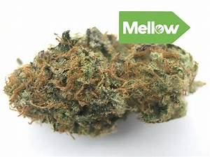 Northern Lights   Marijuana Strain Reviews   AllBud