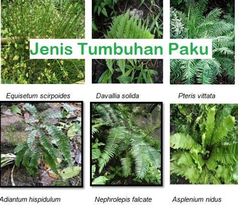 pengertian ciri ciri jenis jenis tumbuhan paku