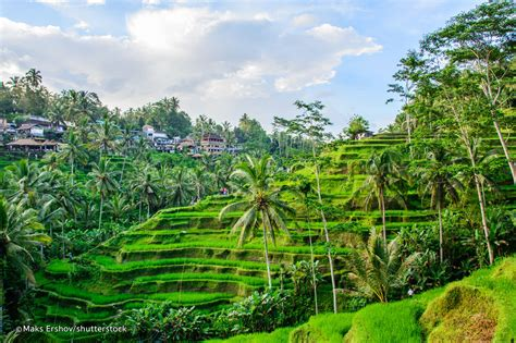 time  ubud    ubud survival guide