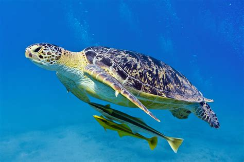 Meet The Six Different Types Of Sea Turtles