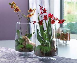 Tulpen Im Glas Ohne Erde : zimmerpflanzen pflege keine chance f r sch dlinge glasgef e mit orchideen orchideen ~ Frokenaadalensverden.com Haus und Dekorationen