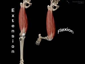 Degrees  Knee Flexion Degrees