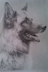 Blake German Shepherd Drawing By Correlation On Deviantart