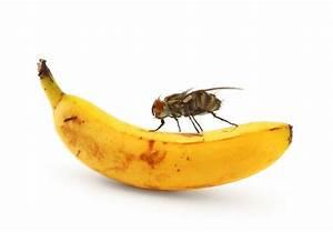 Fruchtfliegen Im Bad : fruchtfliegen einfach und nat rlich aus der k che ~ Lizthompson.info Haus und Dekorationen