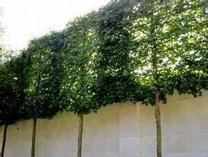 Schlanke Bäume Für Kleine Gärten : schlanke b ume f r kleine g rten geschichte von zu hause aus ~ Michelbontemps.com Haus und Dekorationen