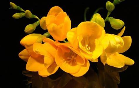 Pavasara ziedi. - Spoki