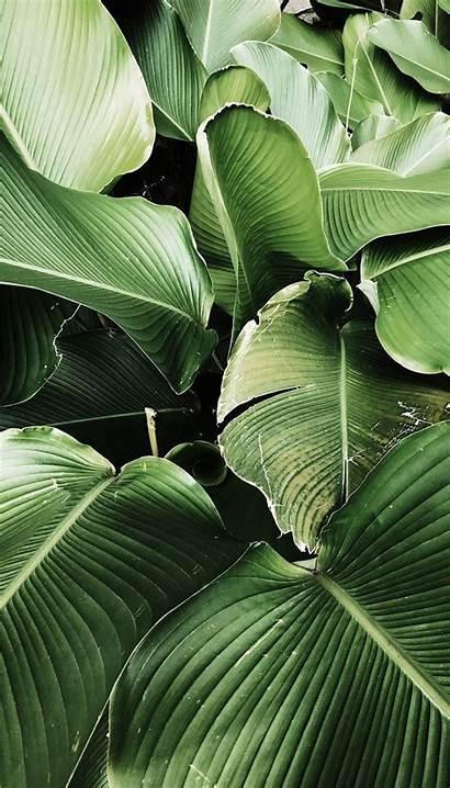 Plant Iphone Landscape Garden Bali Tropical Leaves