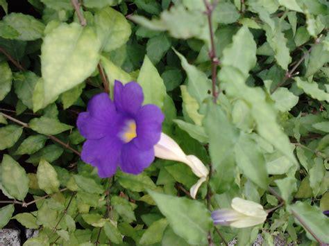 pics of flowering plants garden care simplified 2 easy growing purple flowering plants