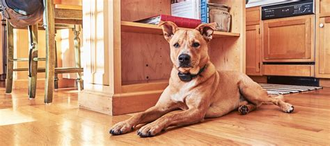 indoor boundaries pet fences dogwatch