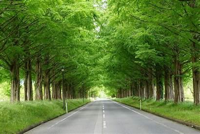Tree Lined Street Metasequoia Makino Japan Zekkei