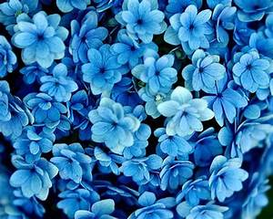 blue flowers | Blue Flowers Wallpaper | wallpaper ...
