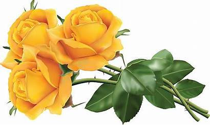 Roses Yellow Clip Illustrations Graphics