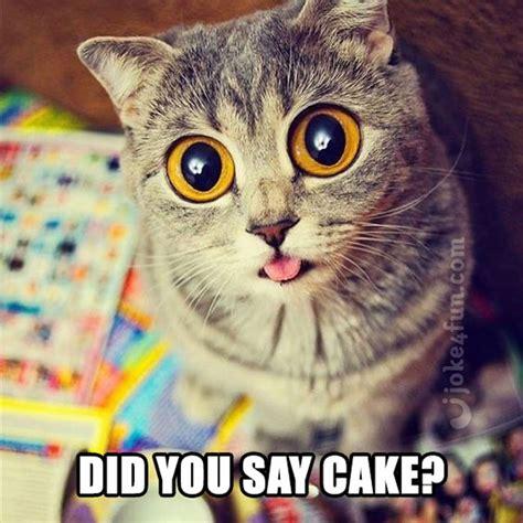 Cake Meme Birthday Cake Cat Meme Www Pixshark Images