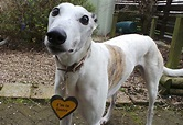 Lord Eric Longlegs - at the Dogs Trust - West Calder needs ...