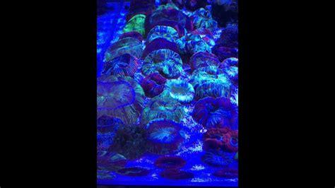 illuminazione led per acquari illuminazione a led per acquari aquarium light x led