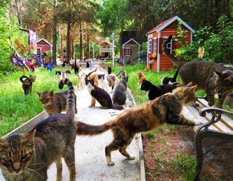 Caboodle Cat Ranch, Vero Beach, Florida Pixdaus