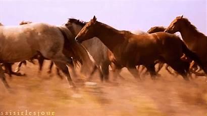 Horses Wild Horse Gifs Ranch Hourse Boy
