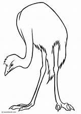 Emu Disegno Colorare Malvorlage Coloring Ausmalbilder Vogel Bild Ausdrucken Kostenlose Zum Popular Herunterladen Grosse Abbildung Scarica Immagine Grande sketch template