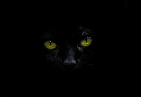 imagen de ojos de gato negro foto gratis